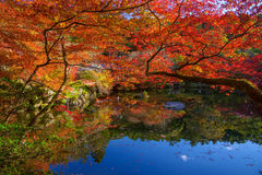 Autumn leaves around pond at Daigoji temple, Kyoto Royalty Free Stock Images