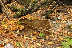 Autumn leaves around pool. Ing water in countryside on sunny day Royalty Free Stock Photos
