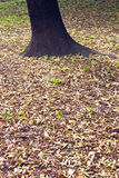Autumn leaves around a tree Royalty Free Stock Photos