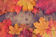 Autumn leaves arranged in a frame on a shabby chic backgr Royalty Free Stock Photography