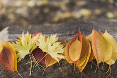 Autumn leaves arrangement Royalty Free Stock Photo