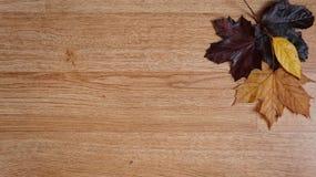 Autumn Leaves arranjou em um canto contra um fundo de madeira imagens de stock royalty free