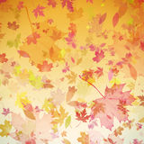 Autumn leaves art Royalty Free Stock Photos