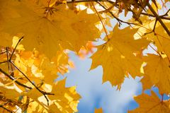 Autumn leaves in sky as background. Selective focus. Royalty Free Stock Photos