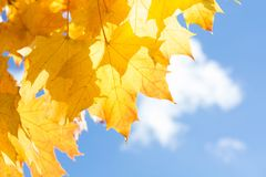 Autumn leaves in sky as background. Selective focus. Stock Photo