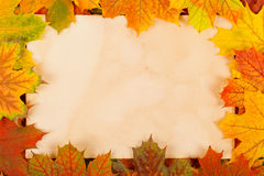 Autumn leaves as border royalty free stock image