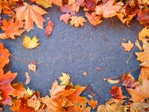 Autumn leaves as a frame on concrete. Autumn mood background. Dry leaves as a frame on concrete stock photos