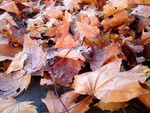 Autumn leaves on concrete. Autumn mood background. Dry leaves on concrete royalty free stock photos