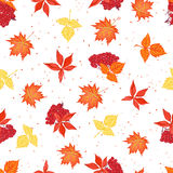 Autumn leaves and ashberry seamless vector pattern. Autumn leaves and red ashberry seamless vector pattern Royalty Free Stock Photo