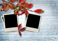 Autumn leaves and ashberry on wooden background with frame Royalty Free Stock Photography