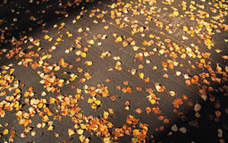 Autumn leaves on asphalt Royalty Free Stock Photos