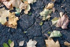 Autumn leaves on the asphalt Stock Photos