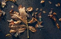 Autumn leaves on asphalt background Royalty Free Stock Photos