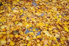 Autumn leaves on asphalt stock photos