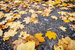 Autumn leaves on asphalt Stock Photo