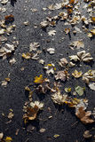 Autumn Leaves on Asphalt Pavement Stock Photos