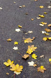 Autumn leaves on the asphalt road Stock Photos