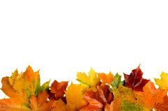 Autumn Leaves At Bottom Isolated On White Stock Photos