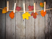 Autumn leaves attach to rope with clothes pins Royalty Free Stock Photos