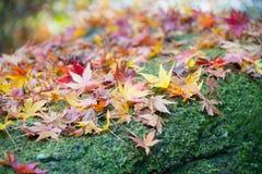 Autumn Leaves auf dem moosigen Felsen Stockbilder