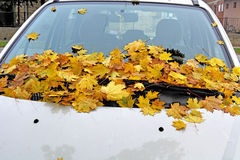 Autumn leaves on auto Stock Images