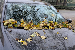 Autumn leaves on auto Stock Image