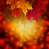 Autumn leaves on an autumn background bokeh. Autumn leaves on autumn background bokeh, vector art illustration Royalty Free Stock Images