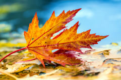 Autumn leaves in autumn colors and lights. Rainy autumn weather. Fallen autumn leaves in water and rainy weather. Autumn colors. Royalty Free Stock Images