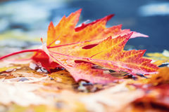 Autumn leaves in autumn colors and lights. Rainy autumn weather. Fallen autumn leaves in water and rainy weather. Autumn colors. Stock Photo
