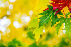 Autumn leaves in autumn colors and lights. Rainy autumn weather. Fallen autumn leaves in water and rainy weather. Autumn colors. stock photography