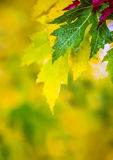 Autumn leaves in autumn colors and lights. Rainy autumn weather. Fallen autumn leaves in water and rainy weather. Autumn colors. Stock Photos
