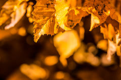 Autumn leaves in autumn colours and lights Royalty Free Stock Images