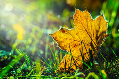 Autumn leaves in autumn colours and lights Royalty Free Stock Photos