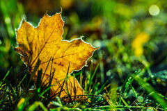 Autumn leaves in autumn colours and lights Stock Images