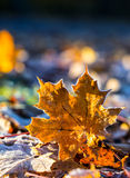 Autumn leaves in autumn colours and lights Stock Photos