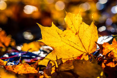 Autumn leaves in autumn colours and lights Stock Photo