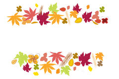 Autumn leaves. Autumn fall background vector. Illustration Stock Images