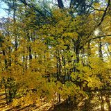 Autumn leaves. Autumn golden scene Stock Photography
