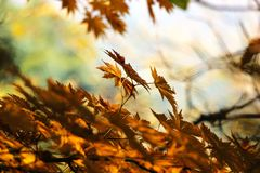 Autumn, Leaves, Autumn Leaves Stock Photos