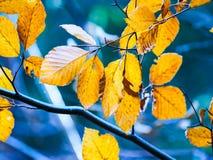 Autumn Leaves. During autumn season Stock Images