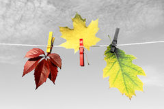 Autumn Leaves Autumn Leaves Background Folhas de outono da cor Fotos de Stock Royalty Free