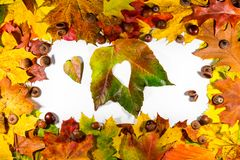 Autumn leaves. Autumn leaves heart. Autumn leaves on white background. Color autumn leaves. Autumn hearts for love. Autumn leaves Royalty Free Stock Photo