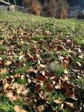 Autumn leaves. Sun, rest, yellow Stock Photos