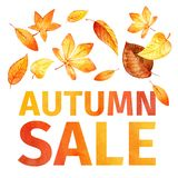Autumn leaves. Autumn sale watercolor. Royalty Free Stock Images