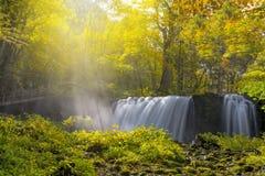 Autumn Leaves av den aomori vattenfallet i den Japan naturen Royaltyfri Bild