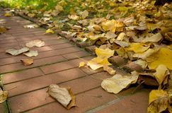 Autumn leaves avenue Royalty Free Stock Photos