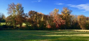 Autumn Leaves Await Their Fall lizenzfreie stockfotografie