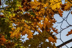 Autumn leaves backgroud royalty free stock photos