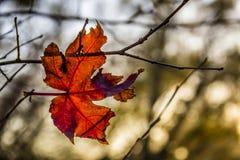 Autumn leaves backgroud stock image