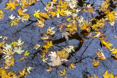 Autumn leaves backgroud stock photo